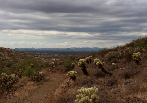 A landscape shot from the Dixie Summit Trail at the Sonoran Desert Preserve in Phoenix, Arizona on Oct. 2, 2016. (Photo by Tynin Fries)